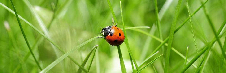 Inspirational Quote Ladybug